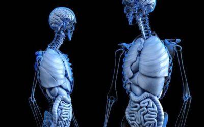 Enfermedades Neuromusculares. Síntomas y Tratamiento